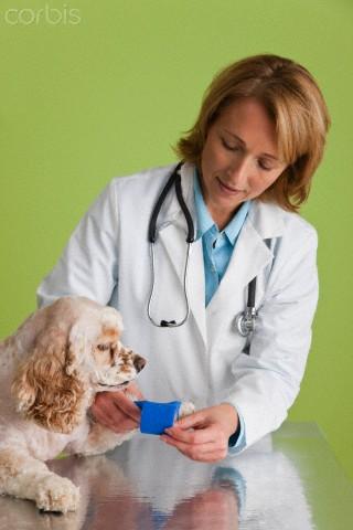 Cachorro no veterinario - hipertensão